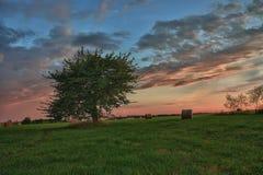 Höbaler och ensamt träd på en äng mot härlig himmel med moln i solnedgång Arkivbild