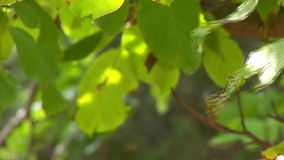 Hd - ветвь дерева 01 сток-видео