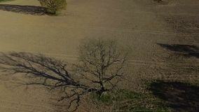 HD Aerial dron footage old tree oak in the field, slow motion. HD Aerial dron footage old tree oak in the field. Slow motion. Shooting in early spring, a field stock footage