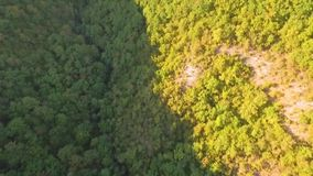 HD Aerial view camera moves rising up from green forest of dense mixed tree tops of pine trees and birches.  stock video