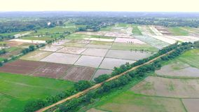 HD aerial view from drone move forword. Beautiful rice plantation field. Agricultural area stock footage