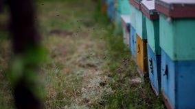HD bijen die in en uit blauwe bijenkorven vliegen Zwerm van bijen bij de ingang van bijenkorf stock footage