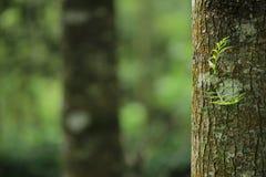 Hd Canada della foresta fotografia stock