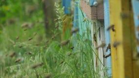 HD dicht omhoog geschoten van verschillende kolonies van bieren die in verschillende bijenkorven vliegen stock video