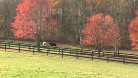 Hd farms countryside autumn farm stock video footage