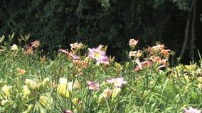 Hd flowers flower stock video footage