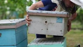 HD-Imkerstapel das beehouse auf dem anderen beehouse, nachdem Honig aus ihm heraus genommen worden ist stock video footage