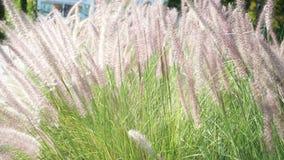 HD-1080x1920p lleno Primer - resume la textura de la flor de la hierba que corre como fondo almacen de video