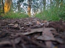 HD-sidor på jordning Royaltyfria Foton