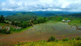Hd Time Lapse  Rice Field slope landscape wide tilt up stock video