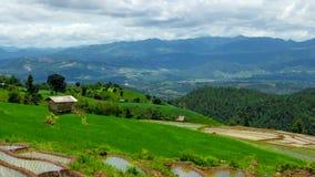 Hd-Zeitspanne Pabongpiang-Reis-Feld 4 summen heraus laut stock video