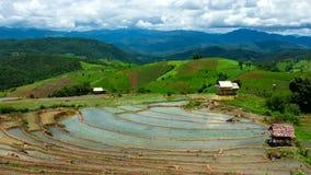 Hd-Zeitspanne-Reis-Feldsteigungslandschaft summen herein laut stock footage