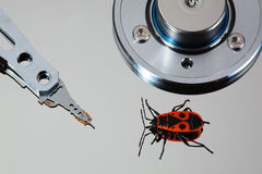 HDD,bug,macro Royalty Free Stock Photography