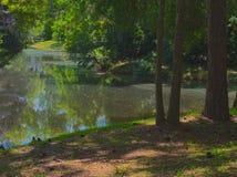 HDR池塘在森林里 库存图片