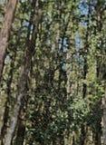 HDR蜘蛛网在森林里 库存图片