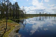HDR -图象风景视图大Viru沼泽湖海滨在爱沙尼亚 库存图片