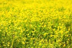 Κίτρινα λουλούδια ΕΙΚΌΝΑΣ HDR Στοκ φωτογραφία με δικαίωμα ελεύθερης χρήσης
