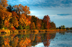 HDR Autumn Forest on Waterfront. An HDR landscape of a forest in beautiful fall colors reflected in the still waters of a calm river in Ontario, Canada Royalty Free Stock Image