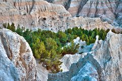HDR Badlands Forest Royalty Free Stock Photo