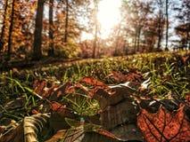 Hdr-Blätter stockfotografie