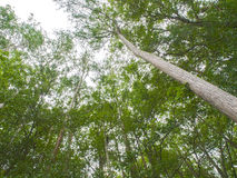 HDR-Bomen die omhoog een lichte hoek bekijken Royalty-vrije Stock Afbeeldingen