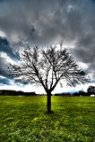 Hdr da árvore Fotografia de Stock