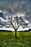 Hdr dell'albero fotografia stock