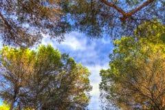 HDR drzewa Fotografia Stock