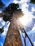 HDR Duży drzewo Obrazy Stock