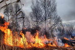 HDR. Fire of grass Royalty Free Stock Images