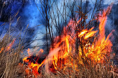 HDR. Fire of grass. Near Kiev,Ukraine. Fire of dry grass Royalty Free Stock Image