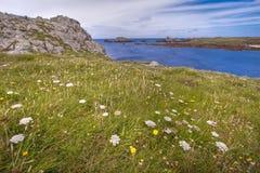 Hdr fleuri sauvage de littoral Photographie stock