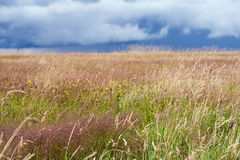 Hdr flowery meadow Royalty Free Stock Images