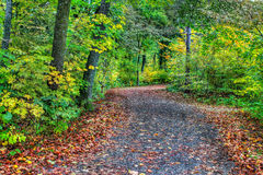 HDR of a forest path Stock Image