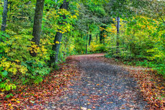 HDR of a forest path in soft focus Stock Image