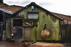 Stare konia i osła stajenki Zdjęcie Royalty Free
