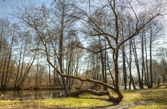 HDR fotografiya.vesennyaya rebirth of nature Royalty Free Stock Images