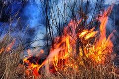 HDR. Fuego de la hierba Imagen de archivo libre de regalías
