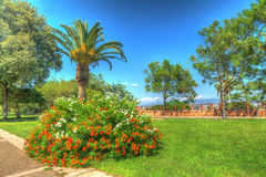 Hdr garden. Palm and flowers in a park. hdr tone mapped Stock Photo