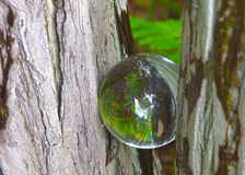 HDR-Glaskugel eine cyprees Kniegabel Stockbilder