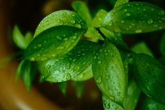 HDR green leaves with water drops Stock Photography
