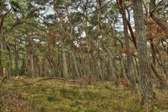 HDR in het hout Stock Foto's
