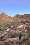 Hdr image of sonoran desert Stock Photography