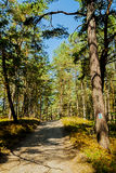 HDR image of trail for nordic walking in a forest Royalty Free Stock Photography