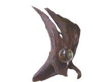 HDR kryształowa kula na driftwood vertical 1 zdjęcia royalty free