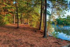 An HDR landscape of a forest and pond. Royalty Free Stock Photo
