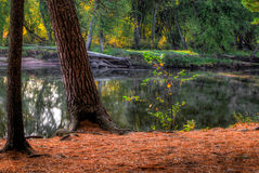 An HDR landscape of a forest and pond. Stock Photos