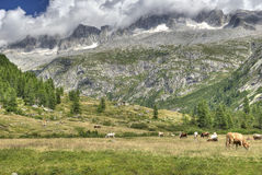 HDR Landscape mountains meadow Stock Photos