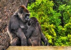 HDR Mutter und Schätzchen Gorilla Stockfotografie