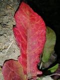 HDR nahm Pflanzenblätter gefangen lizenzfreie stockfotos
